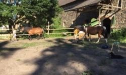 Ponys-Boden