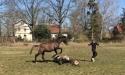 Pferdi-sprung